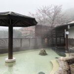 """<span class=""""title"""">女性大浴場×桜が今週見頃を迎えます。  3/21(日)時点で小雨の中、五分咲きでした。  ソメイヨシノが着々と色づき始めております。     ゆっくりと温泉に浸かりながら、また外気浴を楽しみながら  満開の桜を眺めれるのは女性の露天風呂だけ。  この時期だけの女性露天スポットをどうぞお楽しみくださいませ。</span>"""